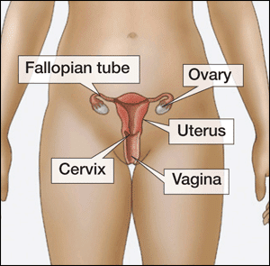 Female anatomy reproductive system